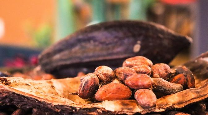 Fideicomiso de Ciencia abre Academia del Cacao para agricultores – El Nuevo Día